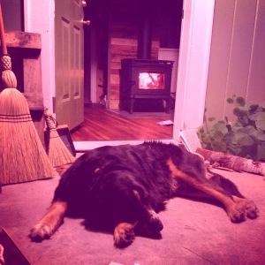 perro pacific energy